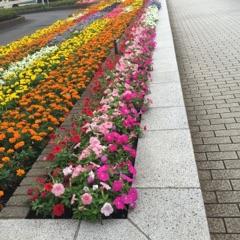 小平駅前花壇画像